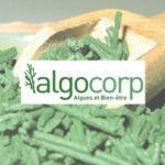 Algocorp - création flyer